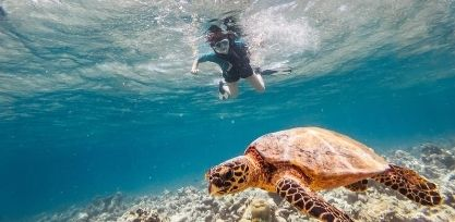 1_Explore Shipwrecks and Snorkel with Turtles