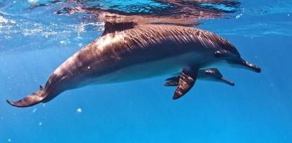 2_Enjoy a Dolphin Cruise