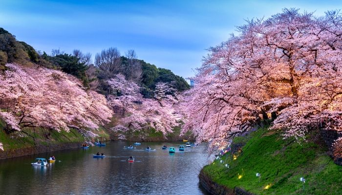 Chidorigafuchi park, Tokyo, Japan