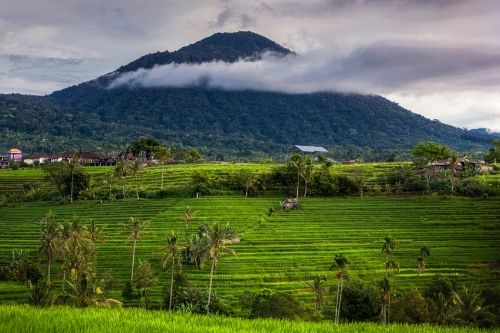 Mount Batukaru, Bali