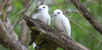 Bird Watching on Cousin Island
