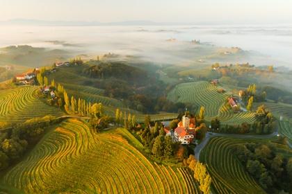 Vineyards and houses on hills, Jeruzalem, Slovenske Gorice, Prlekija, Styria, Slovenia