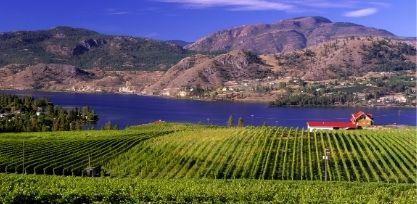 Go Wine Tasting in the Okanagan Valley