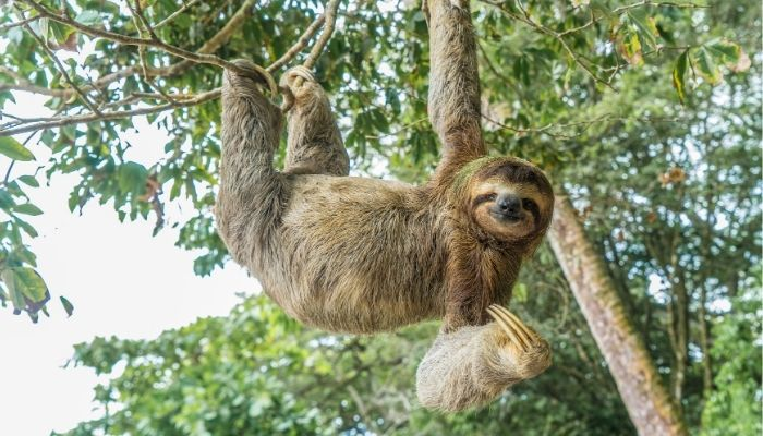 Best Time to Visit Costa Rica - sloth