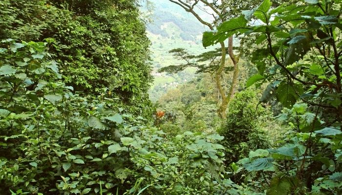 Best Time to Visit Uganda - lush Bwini