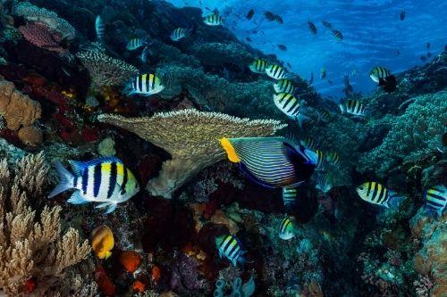 Underwater, Bali
