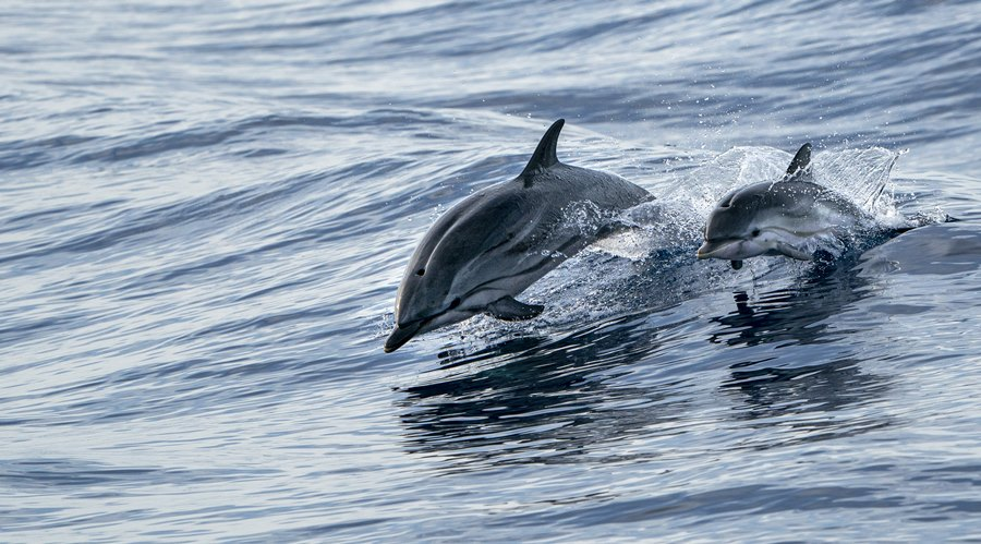 Dolphin conservation