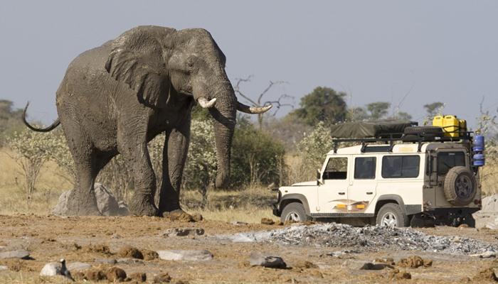 Driving safari in Africa