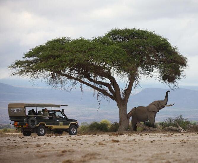 Elewana Tortilis Camp - Amboseli