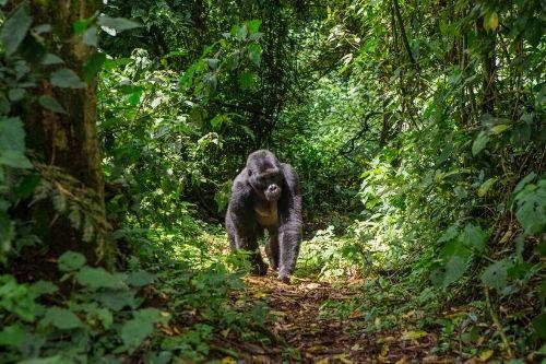 Bwindi National Park, Uganda