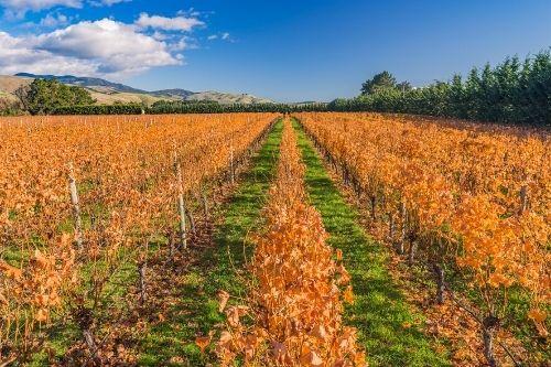 Martinborough Vineyard, NZ