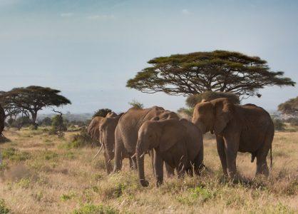 Mt Kilimanjaro from Amboseli National Park, Kenya