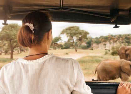 Game drive - African safari