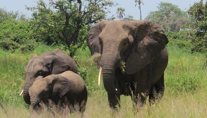 Tanzania Ruaha National Park