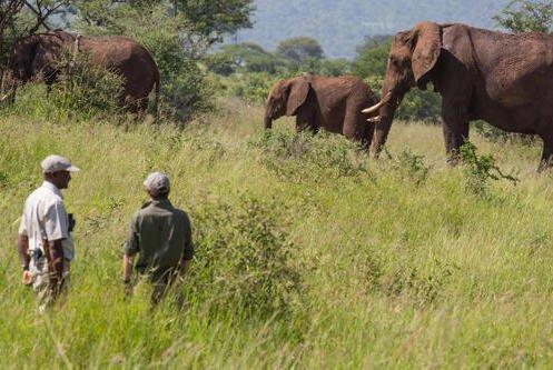 Tarangire Walking Safari - Elewana Tarangire Treetops
