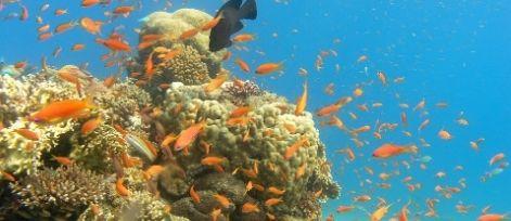 Diving on Eilat's Reefs