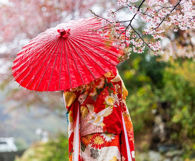 Kyoto, Japan Cherry blossom sakura trees in spring with blooming flowers in garden park by river and woman in red kimono and umbrella