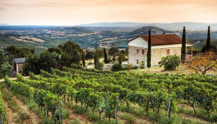 Tuscany vineyard, Italy