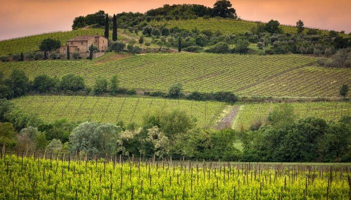 Montalcino vineyard, Italy
