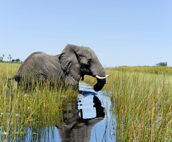 Elephant Delta