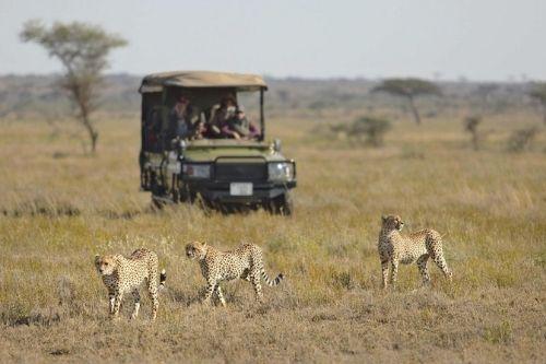 Namiri Plains , Tanzania