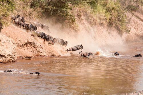 Wildebeest River