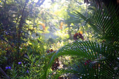 Rainforest, Sri Lanka