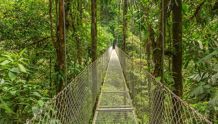 Rope Bridge Costa Rica