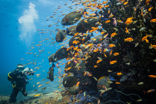 Diving - Azura Marlin - Credit - Scott Ramsey
