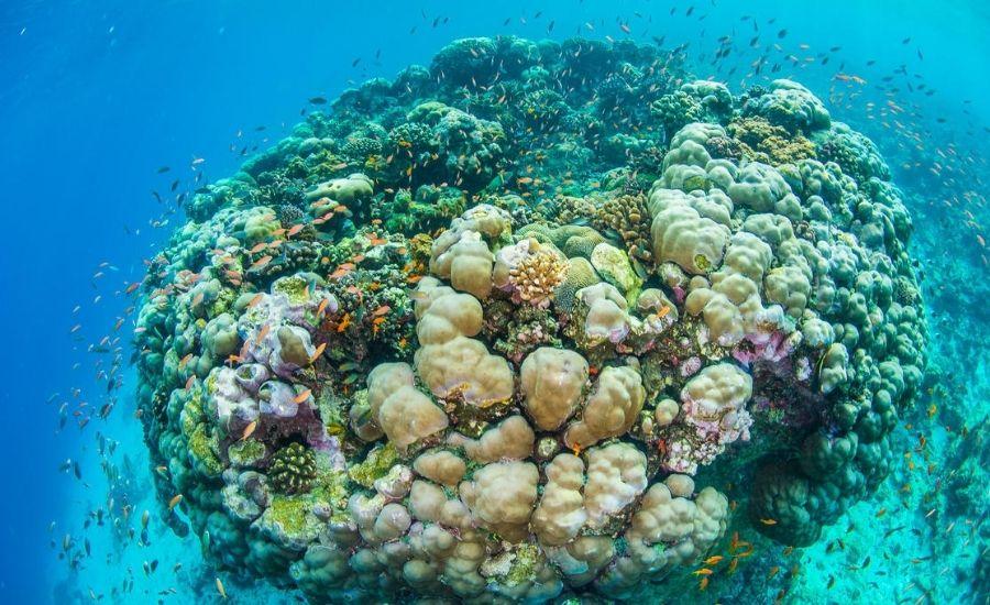 Diving off Manta Reosrt, Pemba