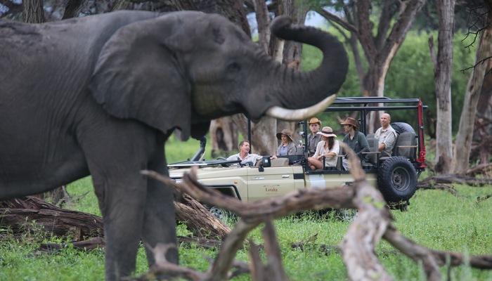 Game Drive - Letaka Safaris
