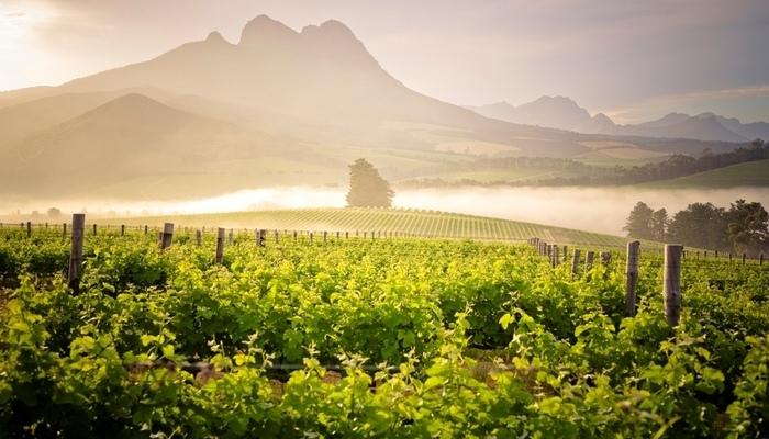 Image Credit - Warwick Wines