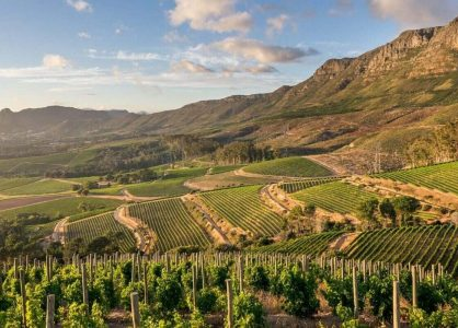 Winelands Credit - Klein-Constantia Banner