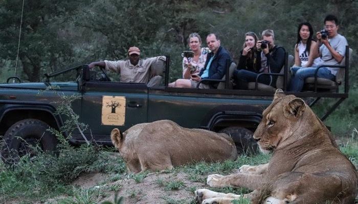 Lion Game drive - Image credit Baobab Ridge