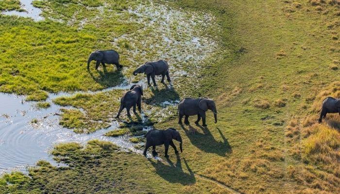 Moremi Game Reserve, Elephants, Botswana