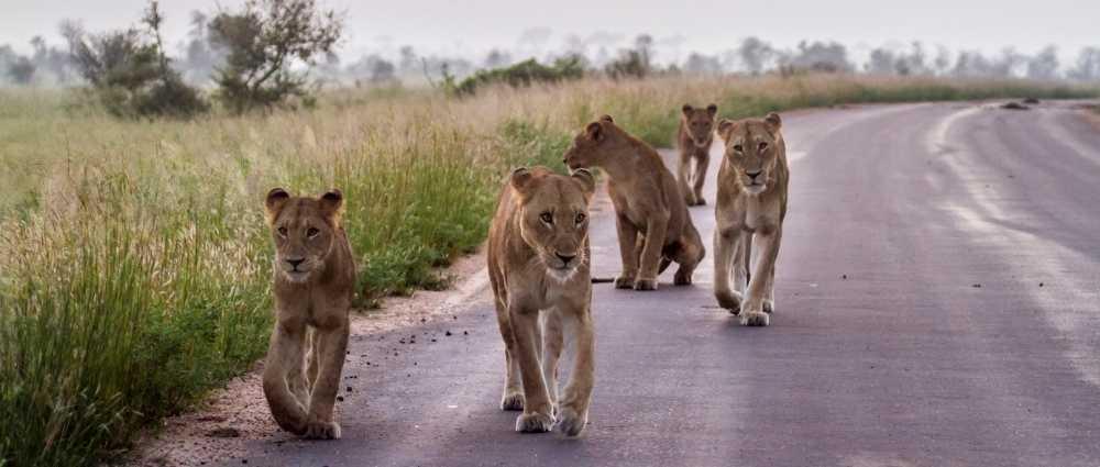 Greater Kruger, South Africa