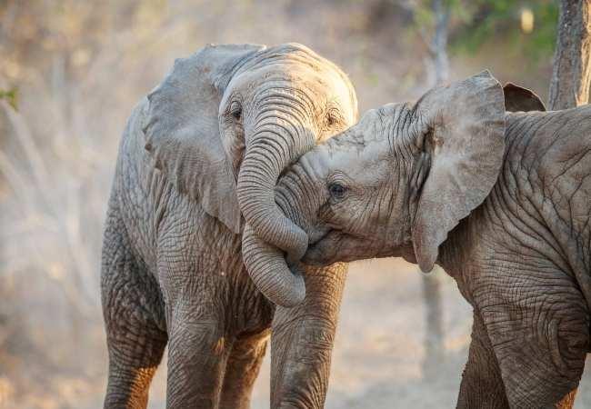 Baby elephant Kenya