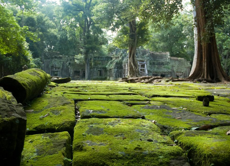 Jungle temples in Siem Reap, Cambodia