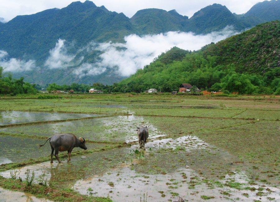 Rice fields, Pu Luong, Vietnam