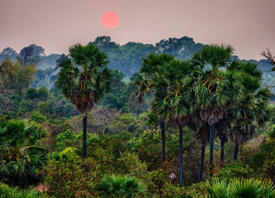 Jungle scene in Kirirom National Park, Cambodia