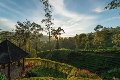 Ceylon Tea Trails Garden