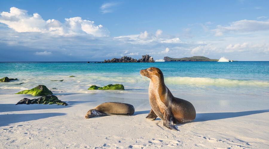 Espanola Island Galapagos