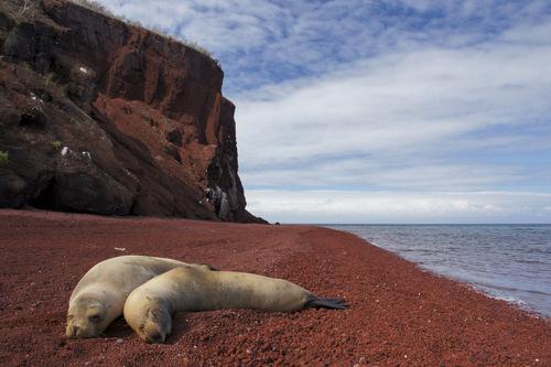 Rabida Island, Galapagos