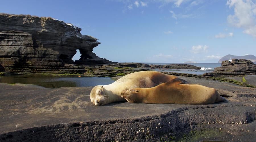 Sea Lions Santiago Island Galapagos