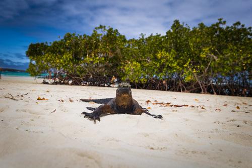 Tortuga Bay Galapagos