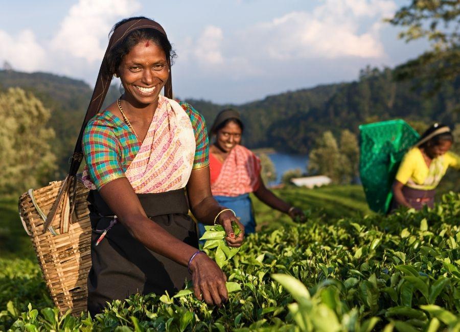 Sri Lanka, Tea Plantations