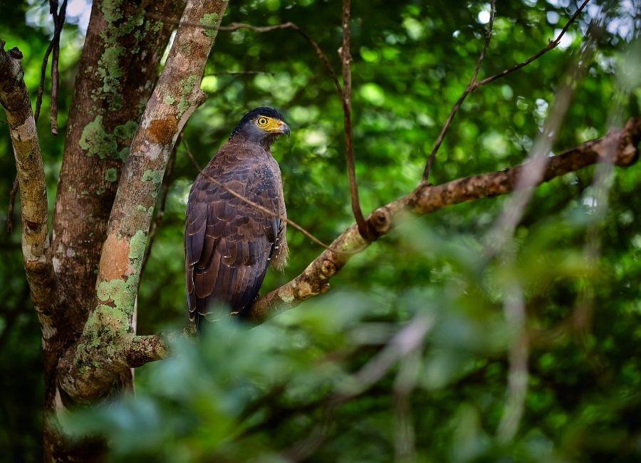 Uda Walawe, Sri Lanka