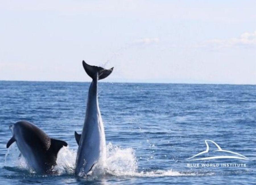 Croatia dolphins