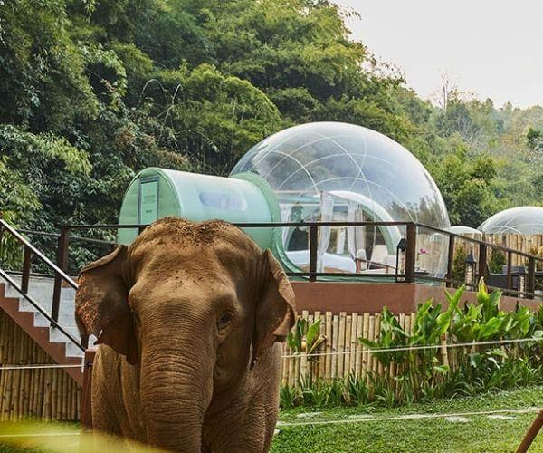 Antara Jungle Bubbles Thailand