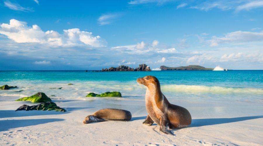 Espanola island, Galapagos